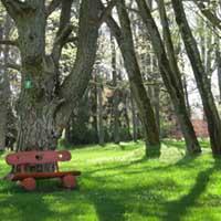 Skats pa kreisi - mīlestības priede . Blakus slīpie koki, kuri ar priedes resno zaru veido arku. Var jau arī atcerēties jaunību, kad zāle bija zaļāka un debesis zilākas...