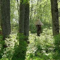 Pa labi starp kokiem pavīd noslēpumains objekts.